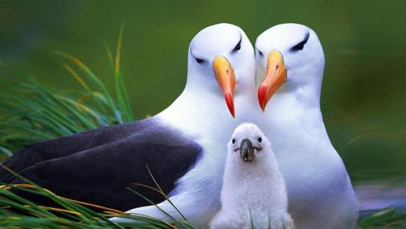 7 animale minunate, de la care putem învăţa ce sunt iubirea şi credinţa