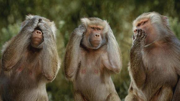 15 curiozităţi despre animale, care îţi vor aduce zâmbetul pe buze