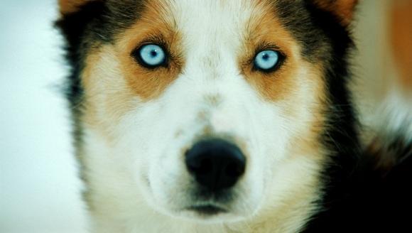 9 lucruri pe care câinele tău le poate vedea și tu nu
