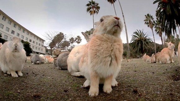 Șase locuri incredibile în care oamenii locuiesc alături de animale exotice