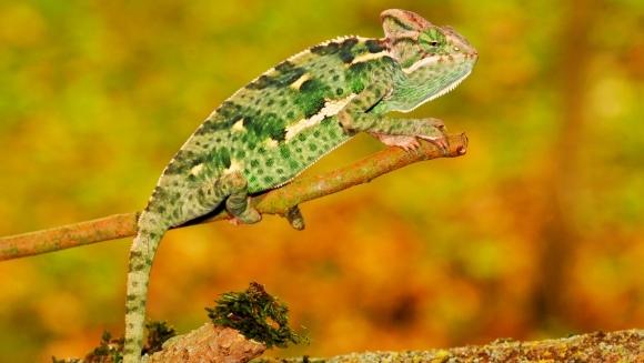 Șapte mituri despre animale, pe care noi încă le mai credem