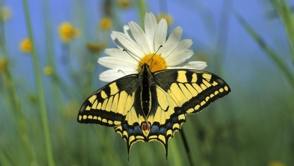 Animale care iubesc vara din toată inima inima