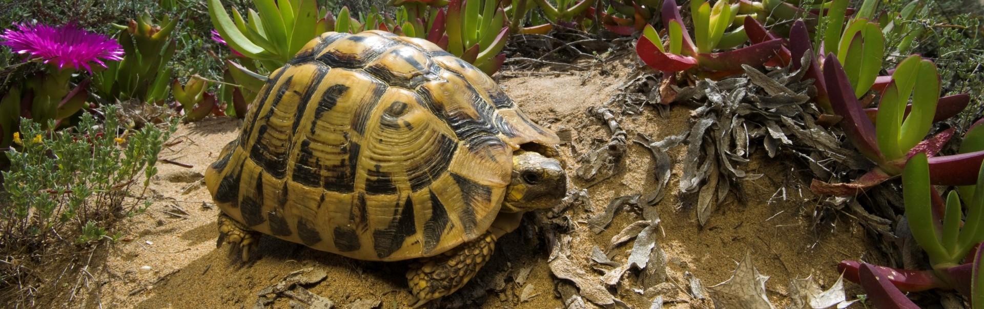 Curiozități broaște țestoase. 6 lucruri pe care nu le știați despre broaște – VIDEO