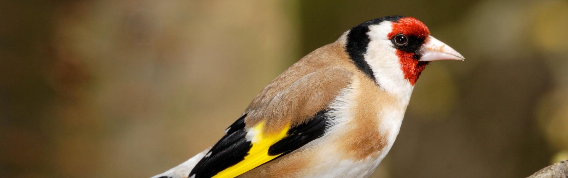 5 lucruri fascinante despre cântecele păsărilor