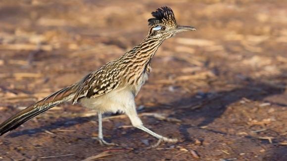 Cinci animale din deșert care s-au adaptat în mod incredibil la mediul de viață