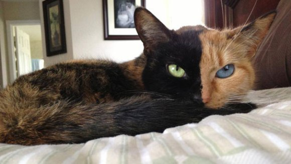 Să facem cunoştinţă cu Venus, pisicuţa cu două feţe