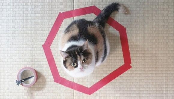 Cum să faci pisica să stea locului! E foarte simplu!