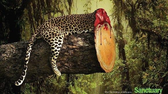 Efectele despăduririlor, în imagini şocante - Galerie Foto