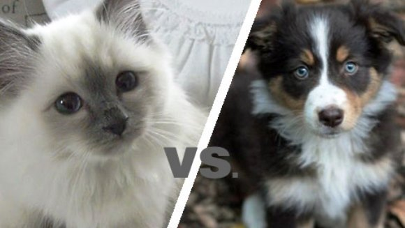 Stăpânii de pisici vs. stăpânii de câini