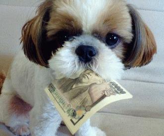 Vreau un animal de companie! Ce buget este necesar?!