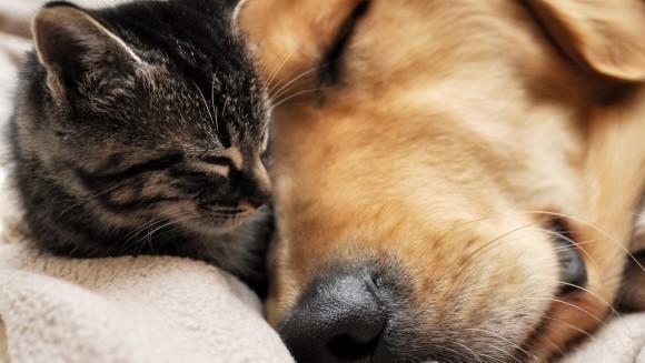 Şi animalele visează!