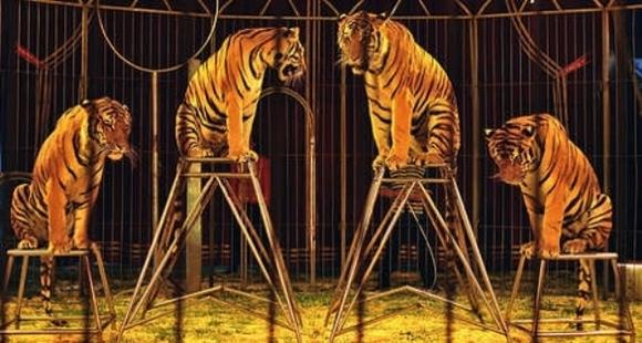 10 practici comerciale simple care distrug animalele