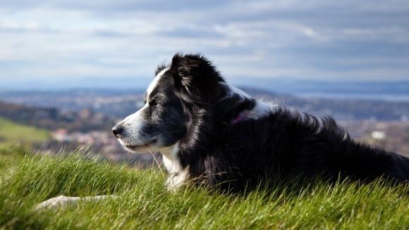 Află cum poți prelungi viața câinelui tău