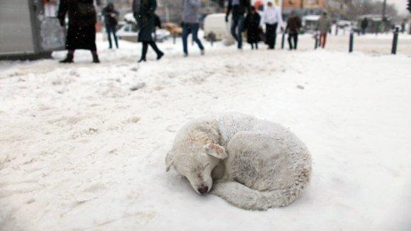 Ajutați câinii fără stăpân să treacă mai ușor peste iarnă