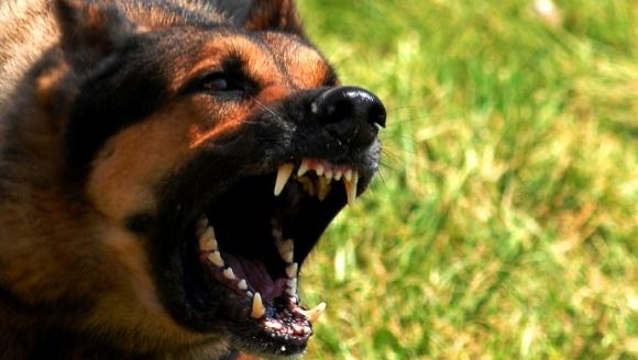 Rabia la animale - una dintre cele mai cunoscute și răspândite infecții virale