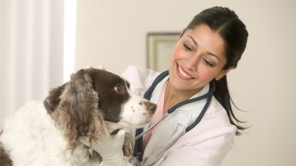 Legea microcipului pentru animalele de companie a intrat în vigoare de la 1 ianuarie
