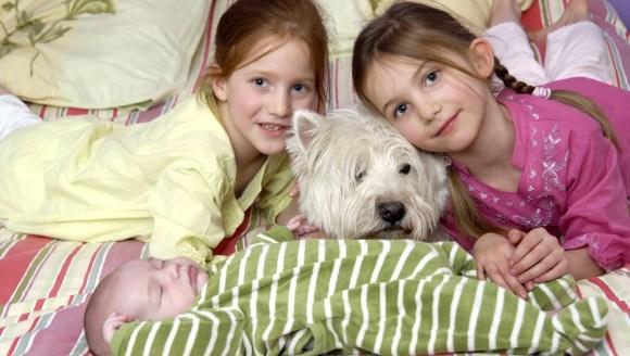 Să învățăm copiii cum să se poarte cu câinii