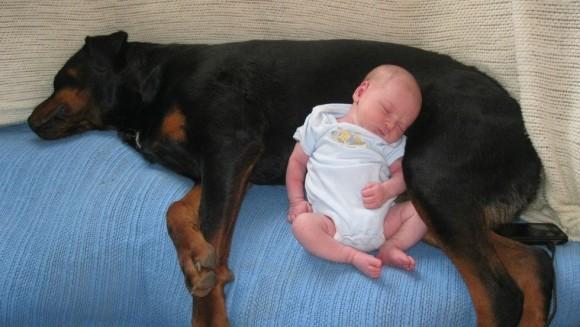 15 cățeluși care s-au îndrăgostit de bebeluși
