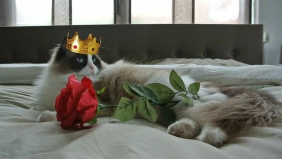 Cum să îți tratezi felina ca pe o regină - VIDEO