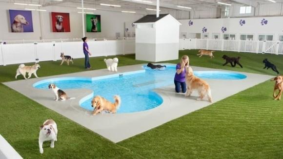 Primul aeroport din lume dotat cu terminal doar pentru animale va arăta ca un colț de paradis