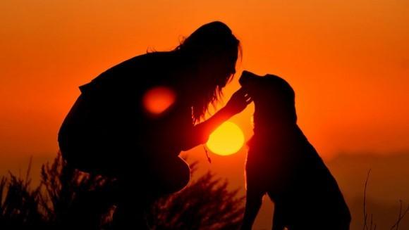 10 perle de înţelepciune de la câinele tău, pentru o viaţă de nota 10