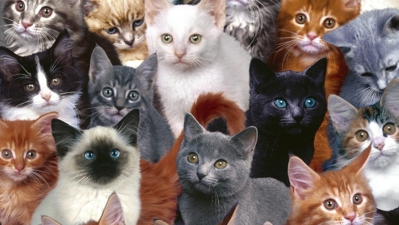 11 motive pentru care merită să te îndrăgosteşti de o persoană care iubeşte pisicile