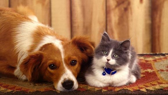 Pregătește-ți câinele și pisica pentru anotimpurile reci
