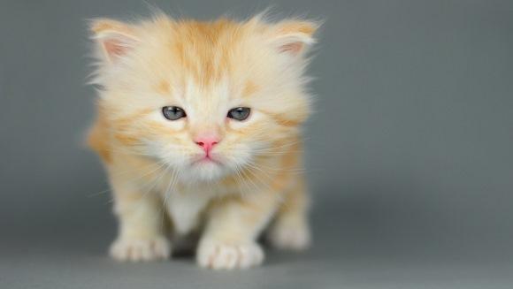 Imaginile cu pisici drăgălașe ne pot face... violenți! Motivul? Iată ce spun cercetătorii