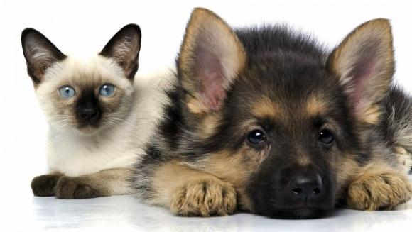 Este posibil ca pisicile și câinii să sufere de Alzheimer?