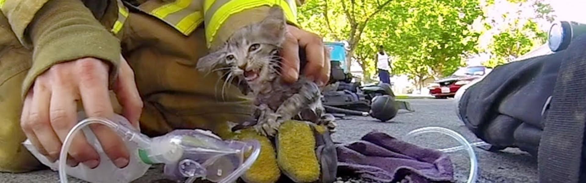 Pompieri care ș-au riscat viața pentru a salva animale - Galerie Foto