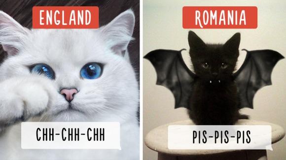 """""""Pis-pis-pis"""", în diferite limbi. Cum își strigă oamenii pisicile, în funcție de țara în care se află - Galerie Foto"""