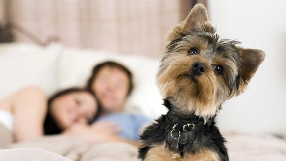 Animale de companie potrivite pentru apartament: reptile, sugar glider şi… păianjeni