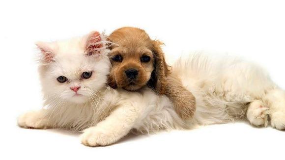 Cinci trucuri pentru a prelungi viaţa animalului de companie