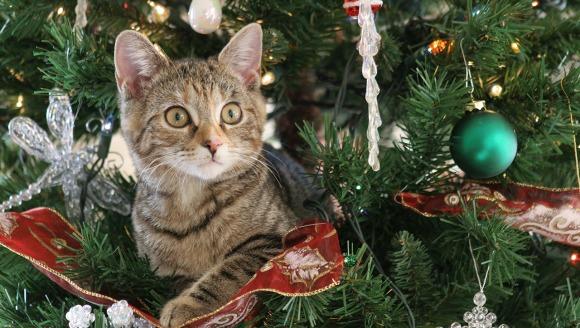 Cum protejezi bradul de Crăciun de pisică