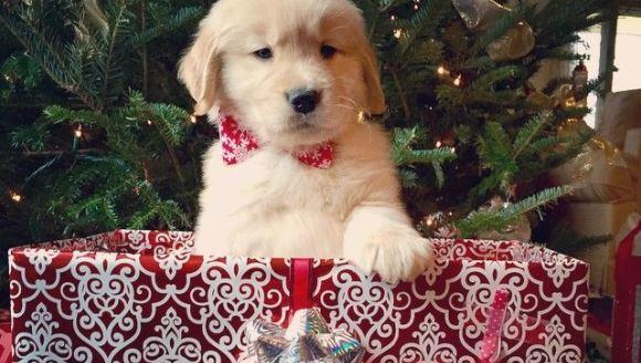 Tot ce trebuie să ştiţi, dacă vreţi să dăruiţi familiei un animăluţ, de Crăciun