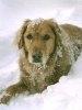 Ingrijirea animalelor de companie iarna