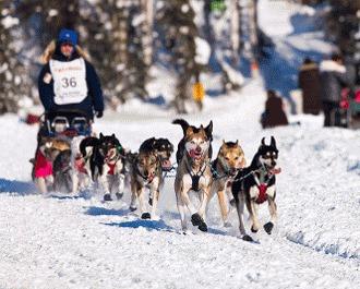Iditarod  - marea cursa de sanii trase de caini