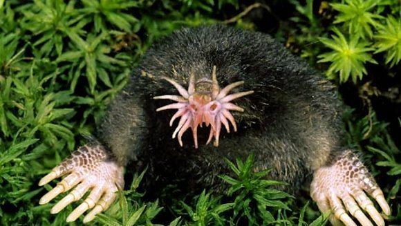 Cele mai urâte specii de animale