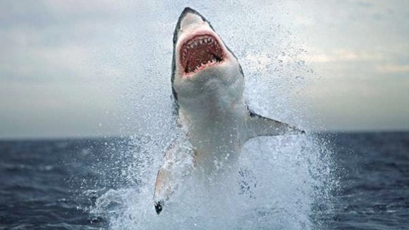 Cele mai periculoase animale ale planetei