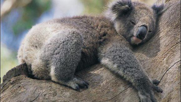 Cele mai adormite 7 animale de pe Pământ