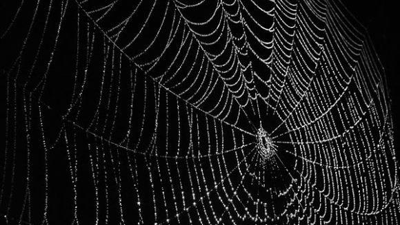 Cea mai bătrână pânză de păianjen are 140 milioane de ani