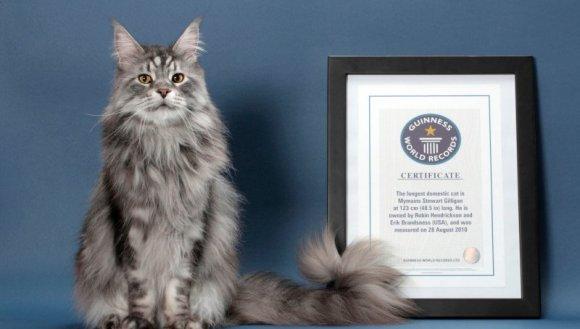 Pufoase şi faimoase – animalele de companie din Cartea Recordurilor