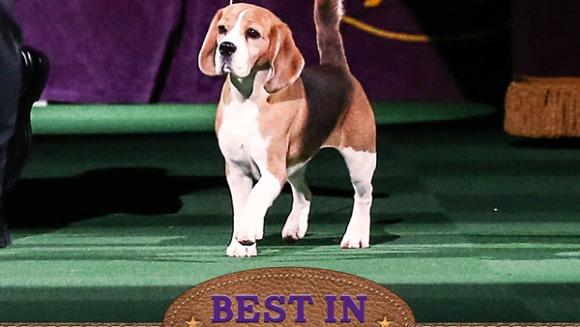 S-a decis! El este cel mai tare câine din lume - VIDEO