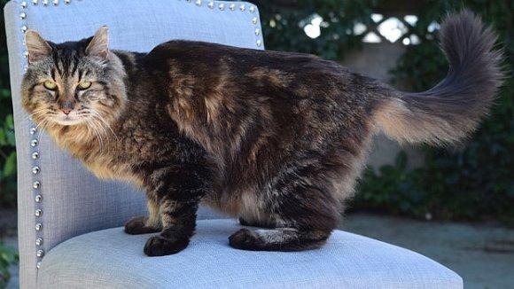 Cartea Recordurilor: câţi ani a împlinit cea mai bătrână pisică din lume