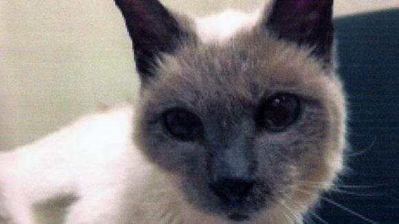 O nouă intrare în Cartea Recordurilor: cea mai bătrână pisică din lume. Ce vârstă are ea
