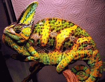 Cum recunoastem bolile reptilelor