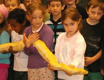 Reptilele - animale exotice de casa