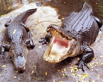 Care sunt cele 4 grupe de reptile?