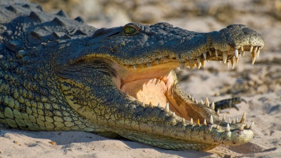 Un crocodil de 2 metri, strivit de o femeie de 120 de kilograme