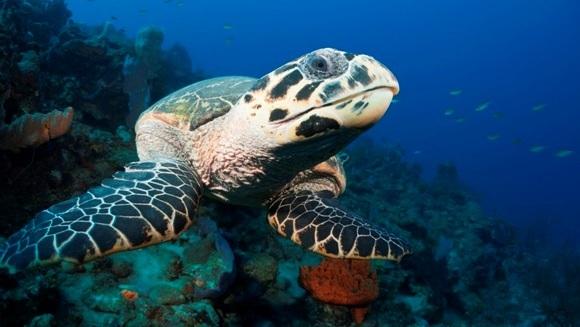 Cum aleg broaştele ţestoase unde să migreze